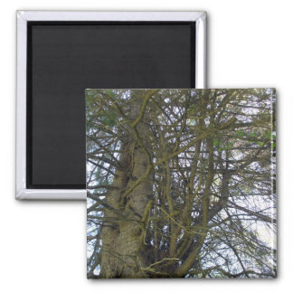 Cedar Tree Branches Square Magnet