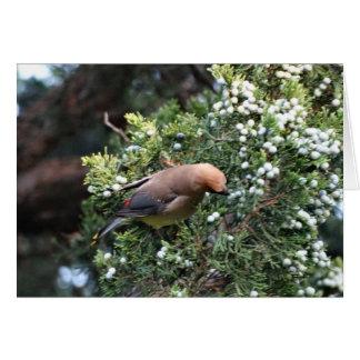 Cedar Tree & Waxwing Card