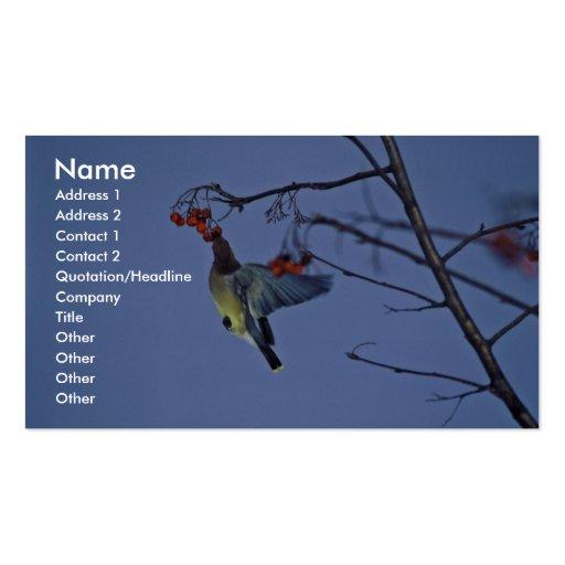 Cedar waxwing feeding on berries business card