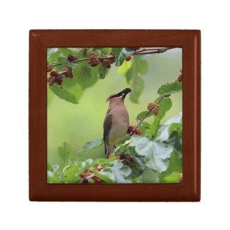 Cedar Waxwing Gift Box