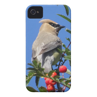 Cedar Waxwing iPhone 4 Case-Mate Cases