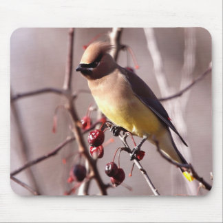 Cedar Waxwing Mouse Pad