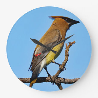 Cedar Waxwing on a Limb Clock