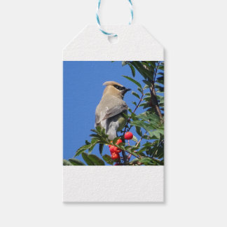 Cedar Waxwing Pack Of Gift Tags