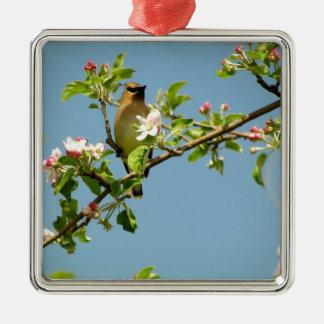 Cedar waxwing Silver-Colored square ornament