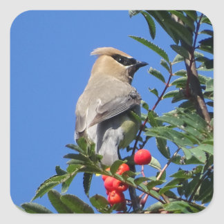 Cedar Waxwing Square Sticker