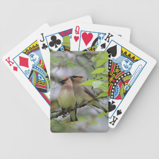 Cedar Waxwings Bicycle Playing Cards