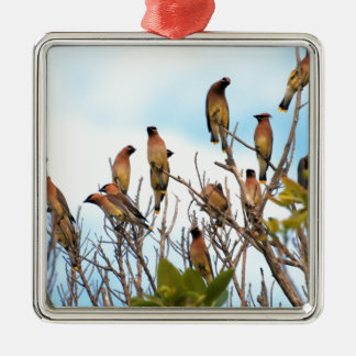 Cedar Waxwings onBlue Silver-Colored Square Ornament