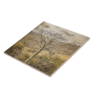 Ceiba Tree at Dry Forest Guayas District - Ecuador Ceramic Tiles