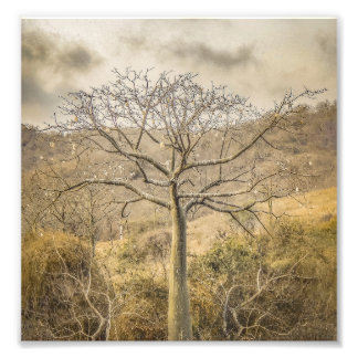 Ceiba Tree at Dry Forest Guayas District - Ecuador Photo Print
