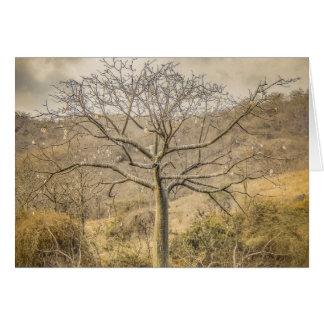 Ceiba Tree at Forest Guayas Ecuador Card
