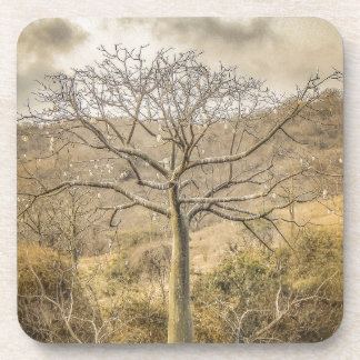 Ceiba Tree at Forest Guayas Ecuador Coaster