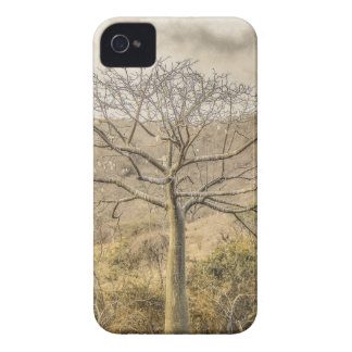 Ceiba Tree at Forest Guayas Ecuador iPhone 4 Cover