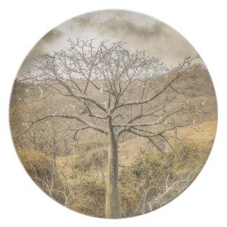 Ceiba Tree at Forest Guayas Ecuador Plate