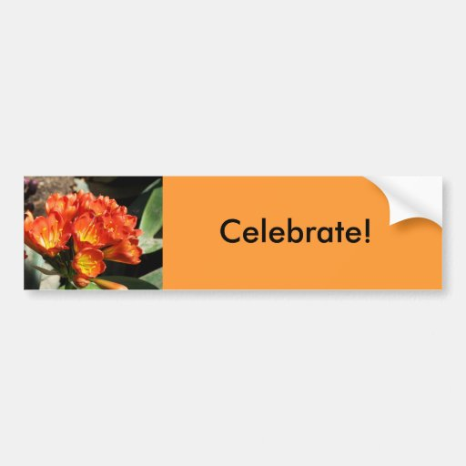 Celebrate Bumper Sticker