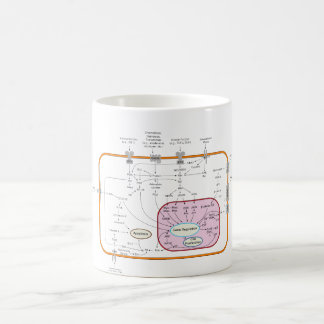 Cell Signal Transduction Pathways Diagram Coffee Mug