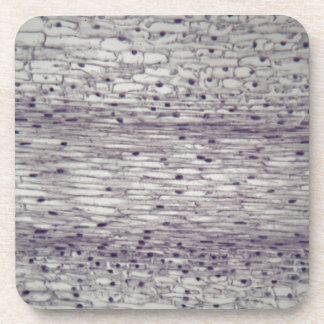 Cells of a root under the microscope. drink coaster