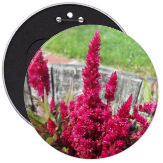 Celosia Red Rustic Fence Garden Buttons