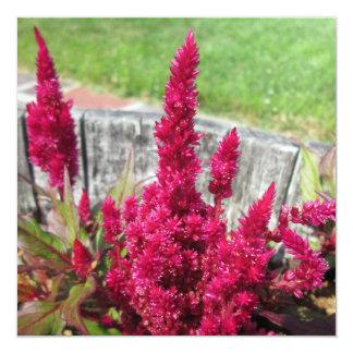 """Celosia Red Rustic Fence Garden 5.25"""" Square Invitation Card"""