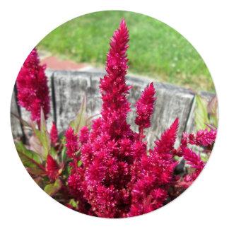 Celosia Red Rustic Fence Garden 5.25x5.25 Square Paper Invitation Card