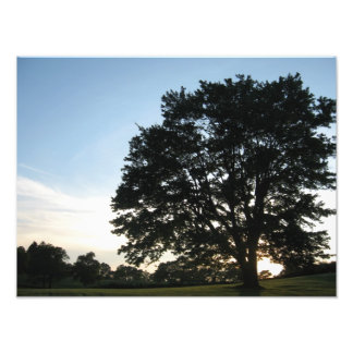 Cemetery Tree Photograph