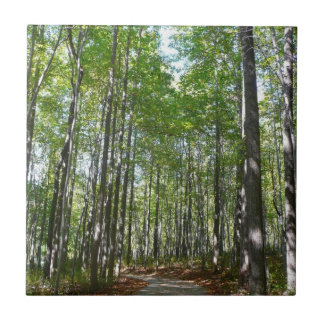 Centennial Wooded Path II Columbia Maryland Photo Tile