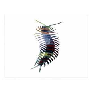 Centipede Art Postcard