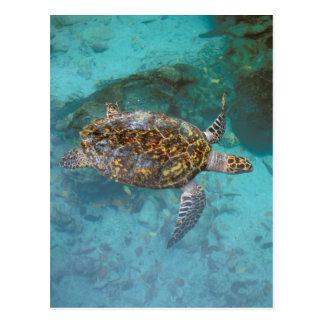 Central America, Panama, Bocas Del Torro Island. Postcard
