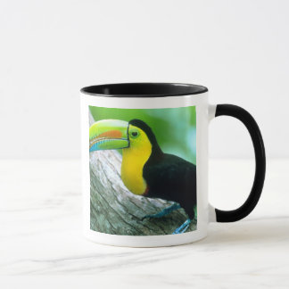 CENTRAL AMERICA, Panama, Borro Colorado Island 2 Mug
