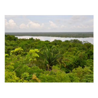 Central America Rain Forest in Belize Postcard