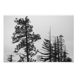 Central Oregon Pines Black and White Photo Print