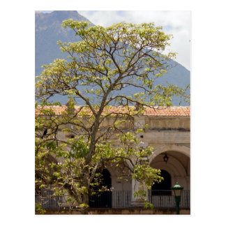 Central Park, Antigua Postcard
