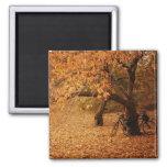 Central Park Autumn - New York City Fridge Magnets