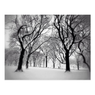 Central Park Blanketed In White Postcard