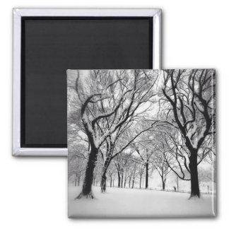 Central Park Blanketed In White Square Magnet