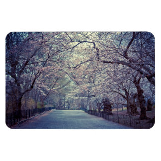 Central Park Cherry Blossom Path Rectangular Photo Magnet
