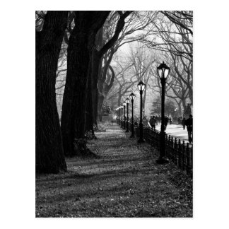 Central Park in New York City Postcard