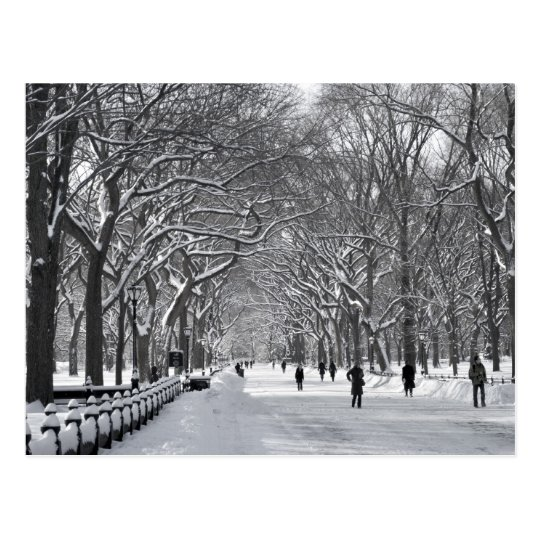 Central Park Mall B&W Postcard