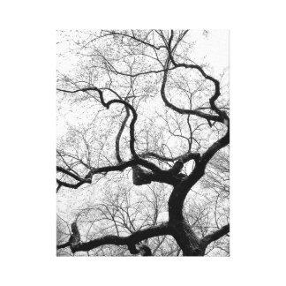 Central Park NYC Canvas Print