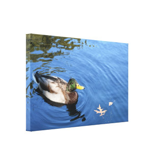 Central Park NYC Conservatory Water Mallard Duck Canvas Print