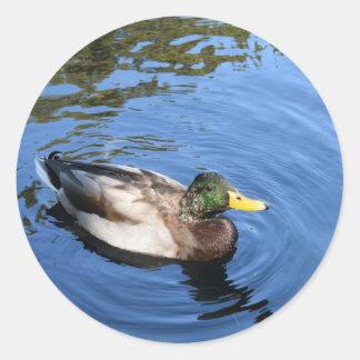 Central Park NYC Conservatory Water Mallard Duck Classic Round Sticker