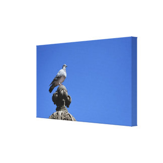 Central Park Pigeon Blue Sky New York City Bird Canvas Print