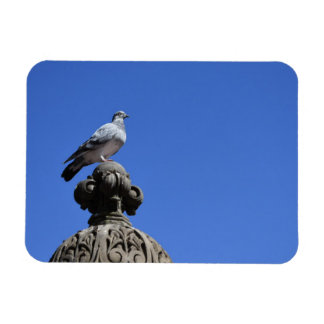 Central Park Pigeon Blue Sky New York City Bird Magnet