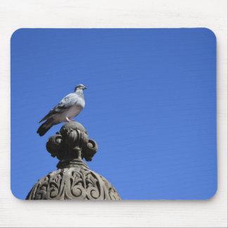 Central Park Pigeon Blue Sky New York City Bird Mouse Pad