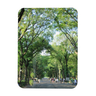 Central Park: Poet's Walk in the Summer Rectangular Photo Magnet