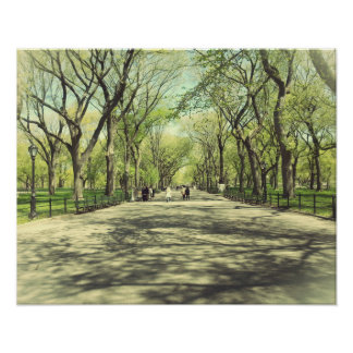 Central Park Tree Path Poster