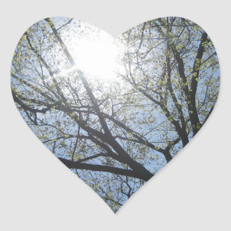 Central Park trees, NYC.JPG Heart Sticker