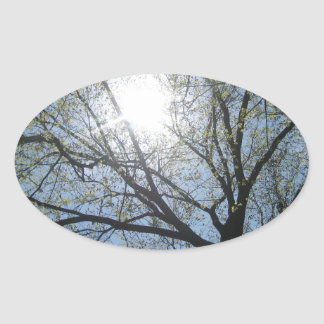 Central Park trees, NYC.JPG Oval Sticker
