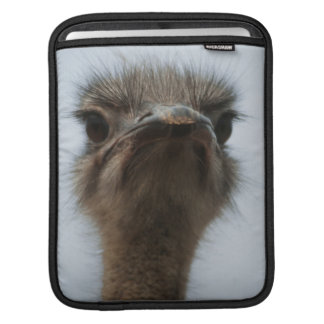 Central South Africa, African Ostrich, Close-up iPad Sleeves