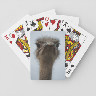 Central South Africa, African Ostrich, Close-up Poker Deck